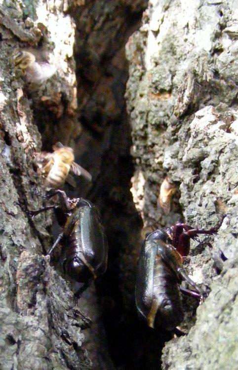osmo_i_pszczoły.JPG