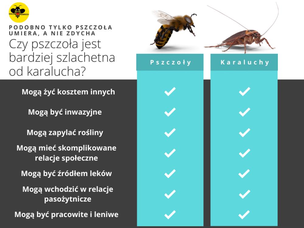 pszczola_a_karaluch.png